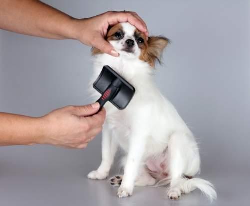 escovação em seu pet