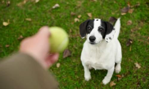 Como escolher a ração certa para o meu cachorro? 03