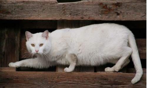 Como saber se um gato está estressado - gato se esconendo