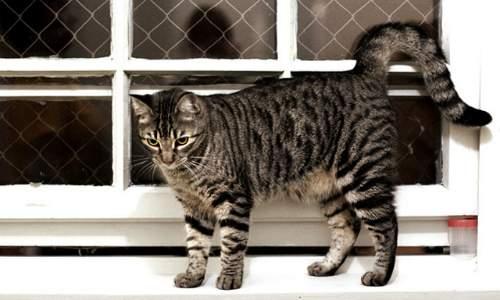 Como saber se um gato está estressado - gato urinando
