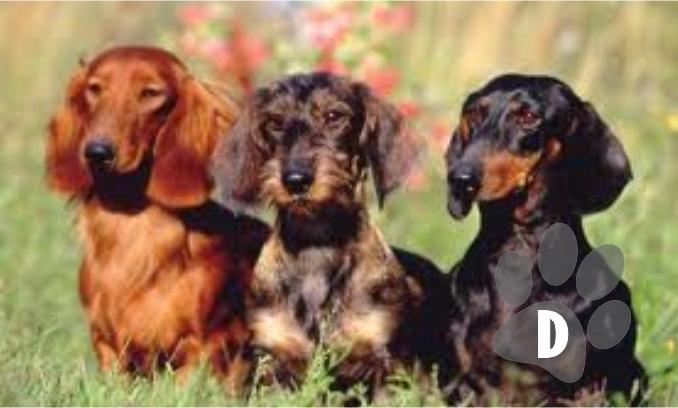 Nomes de cachorros com a letra D