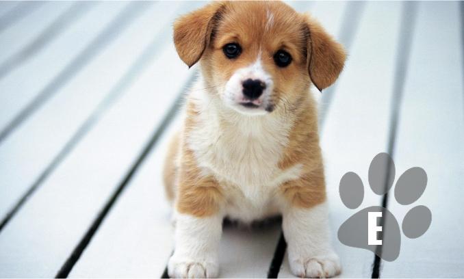 Nomes de cachorros com a letra E