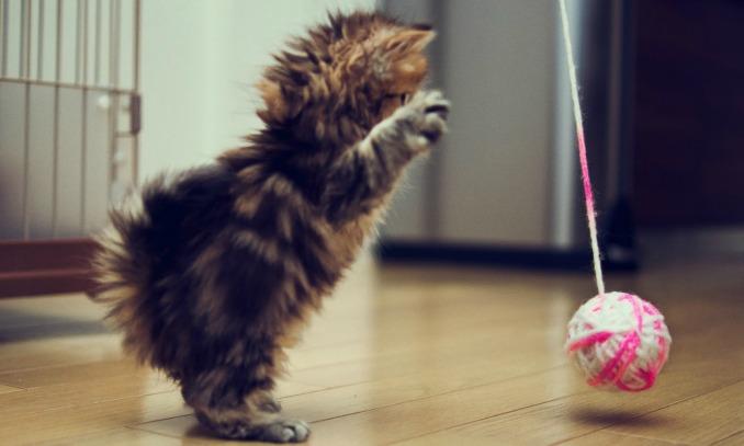 gatinho brincando