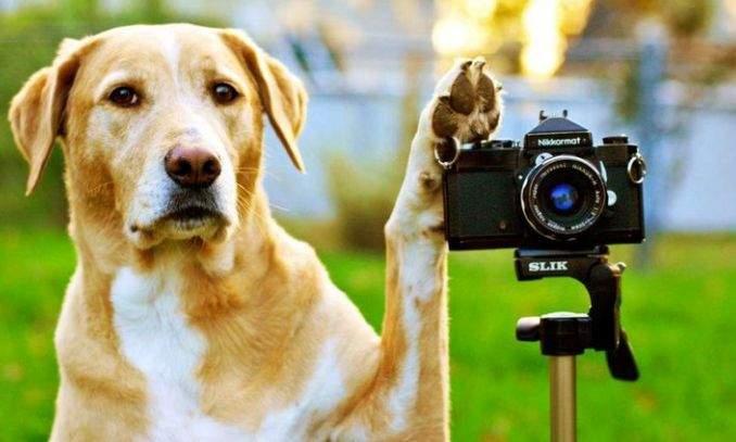 como tirar foto de um cachorro