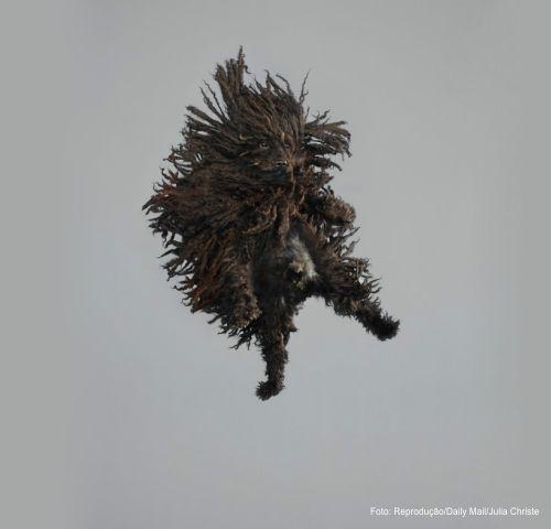 ensaio fotografio com caes voando - 03