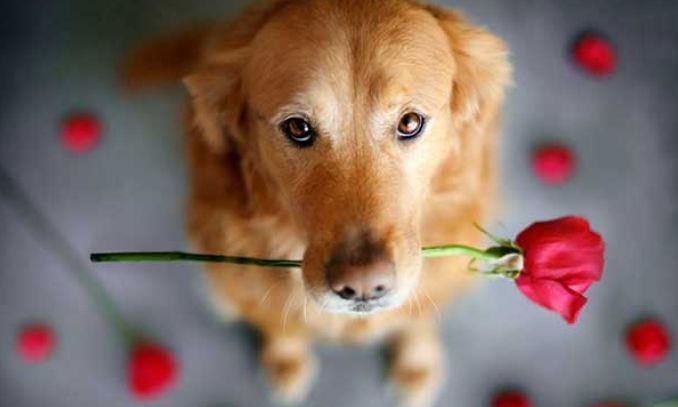 sinais que mostam que seu cachorro ama voce