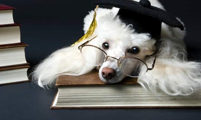 quantas palavras o cachorro compreende