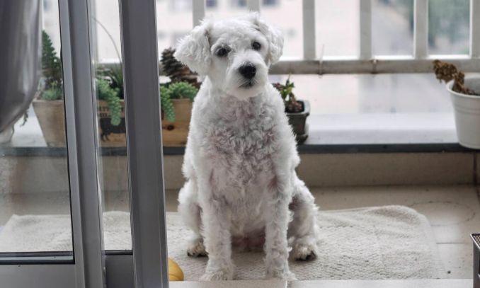 cachorros para apartamento - confira as melhores dicas