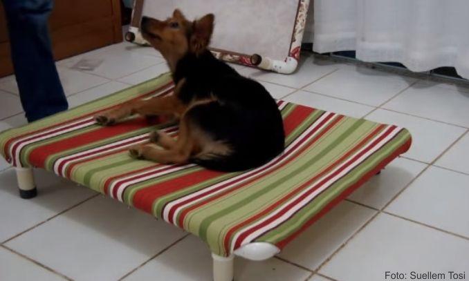 Como fazer cama para cachorro f cil passo a passo for Casa para herramientas de pvc