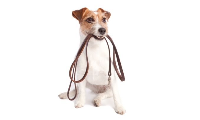 coleira para cachorro