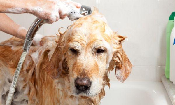 como dar banho em cachorro - 02