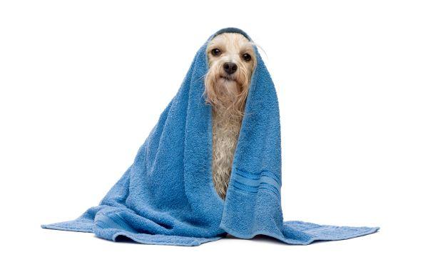 como dar banho em cachorro - 03