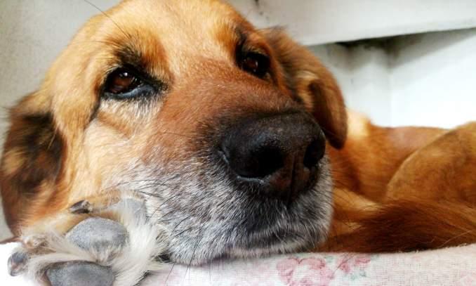 Cães podem sentir quando outro cão morre - Copia