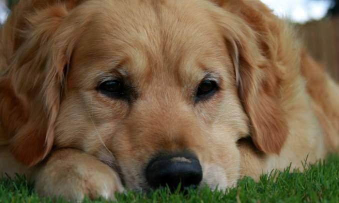Seu cão é otimista ou um pessimista