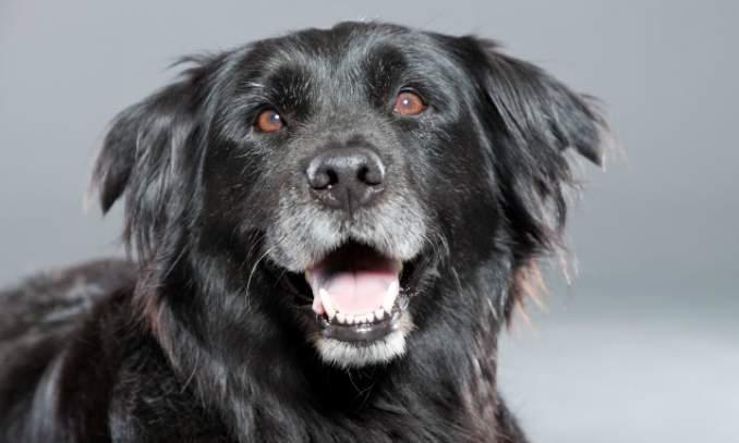 5 Doenças mais comuns em cães idosos