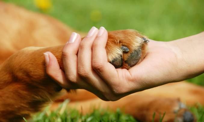 Artrite em cães - Como prevenir e diminuir as dores - Copia