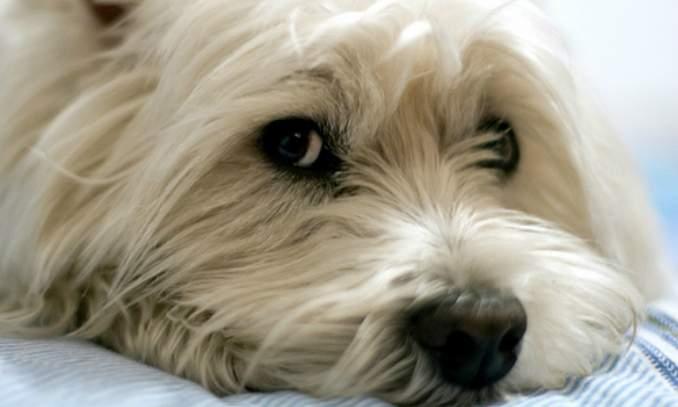 Cachorro vomitando a bile - Quais são a causas