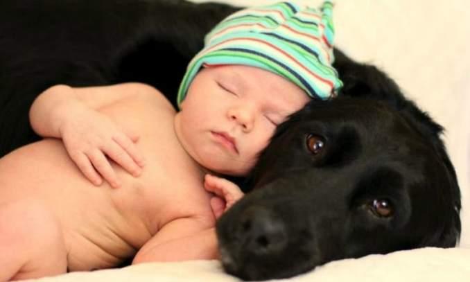 Prepare seu cão para a chegada do bebê