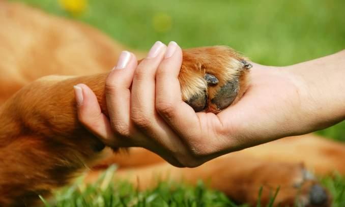 Artrite em cães - Como a obesidade causa a artrite nos cães