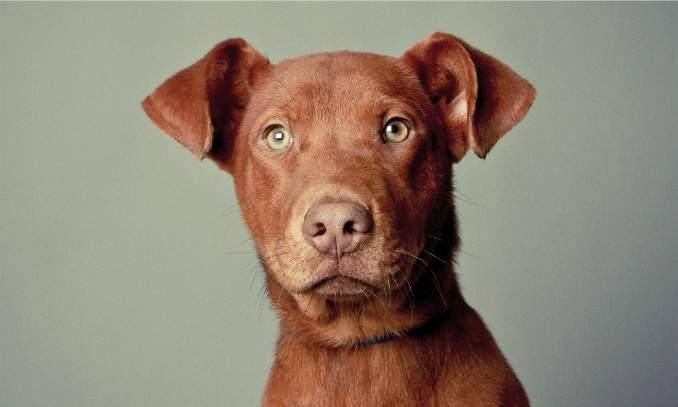 Gastroenterite em cães - Como tratar - Copia