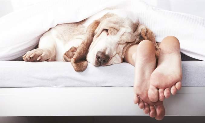 Quantas horas um cachorro deve dormir por dia
