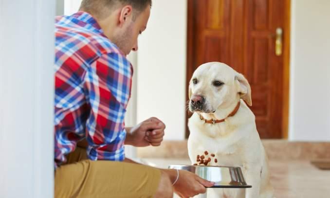 Meu cão não quer comer, quais são as razões
