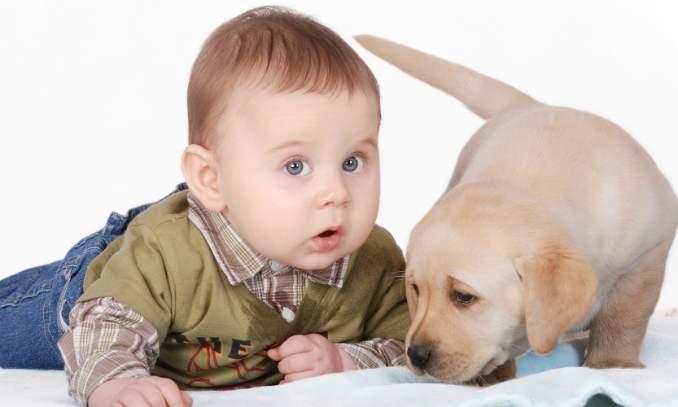 Criança que cresce com cachorro tem menos chances de sofrer asma